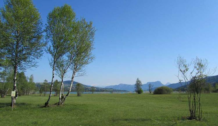 Das Nord Moor am Irrsee, im Hintergrund der Irrsee. (© www.mondsee.at)