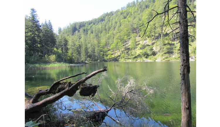 Blick auf den See, im Hintergrund Bäume, im Vordergrund Äste