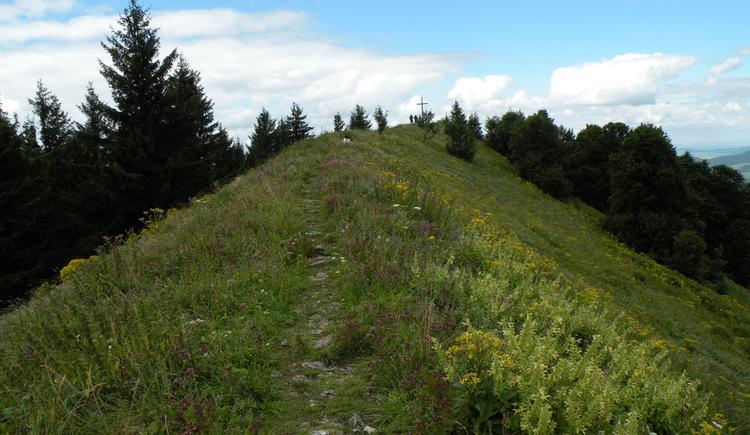 Weg zum Gipfelkreuz (© Tourismusverband Faistenau)