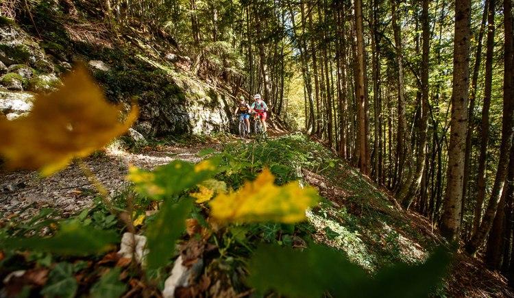 Leichte Trail Abfahrt nach Anzenau auf der Schmankerlrunde. (© Erwin Haiden bikeboard.at)