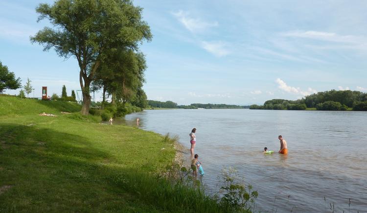 Au an der Donau, Donaustrand. (© Gerhard Ebner)
