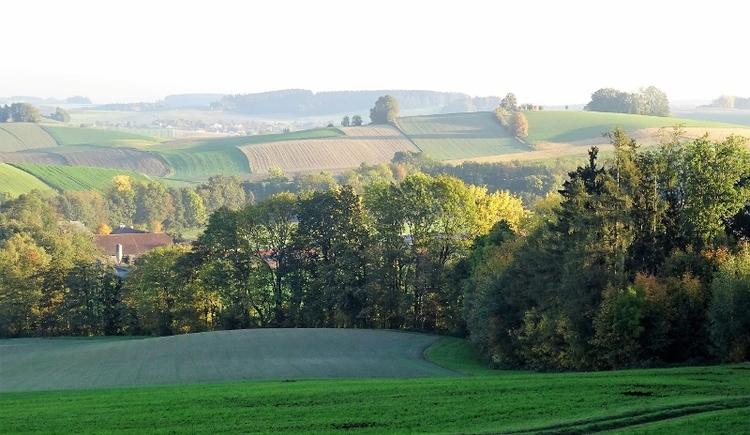 breitwies-baumgarten-runde (© Hermandinger Hans)