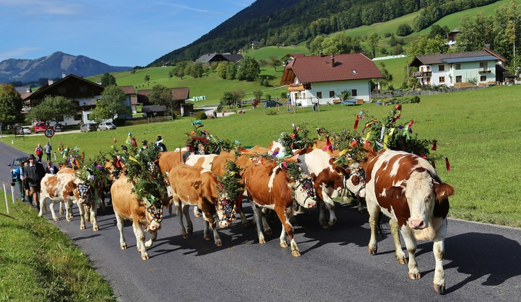 ""\""""Almabtrieb"""" - ceremonial driving down of cattle from the mountain pastures into the valley in autumn""750|435|?|en|2|bb555b9e041323910c0044f762cd3740|False|UNLIKELY|0.3228060305118561