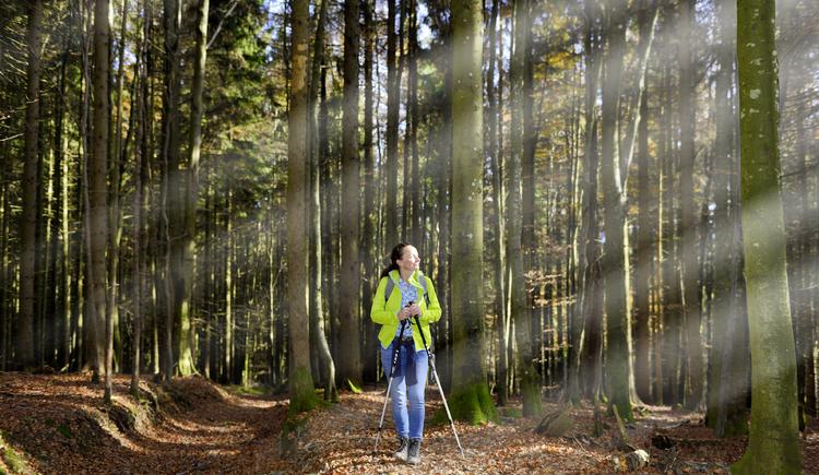 Waldweg (© MTV Ferienregion Traunsee)