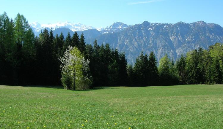 Herrliches Panorama mit dem Dachsteingebirge im Hintergrund