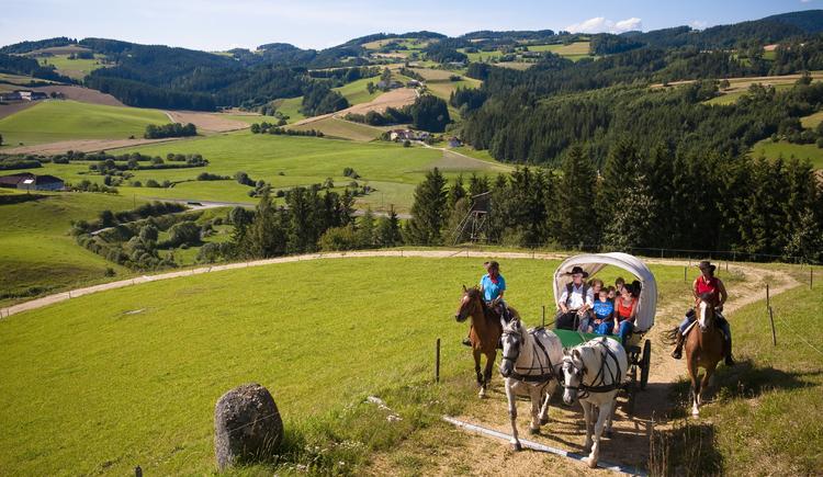 Moser Alm Kutschenrunde (© OÖ. Tourismus/Erber)