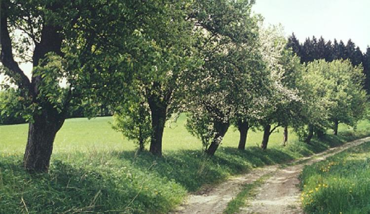 Wandern.jpg (© Kurverband Bad Leonfelden)