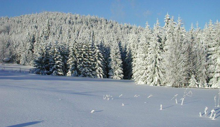Winterwandern ab dem Nordischen Zentrum Zentrum Böhmerwald in Ulrichsberg-Schöneben.