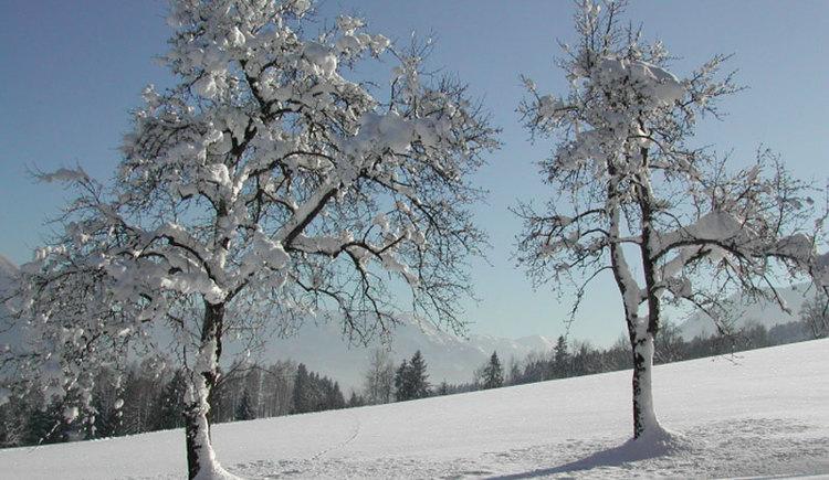 Die Berge und Hügeln rund um Scharnstein laden zum Spazieren ein, hier beim Wolmleithen Bauer. (© Tourismusverband Almtal-Salzkammergut)