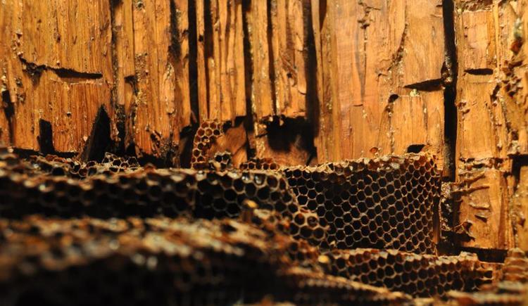 Bienenstock beim Kernhof (© TVB Pyhrn-Priel)