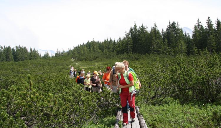 Betty führt eine Gruppe Wanderer auf den Holzstegen zum Löckernmoos. (© Betty Jehle)