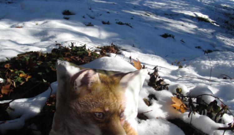 Ferienhaus Rosalinde - Schnee kommt und geht, der Fuchs bleibt