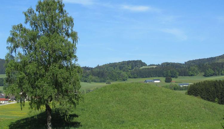Wiese mit einem Hügel und einem Baum auf der Seite. (© www.mondsee.at)