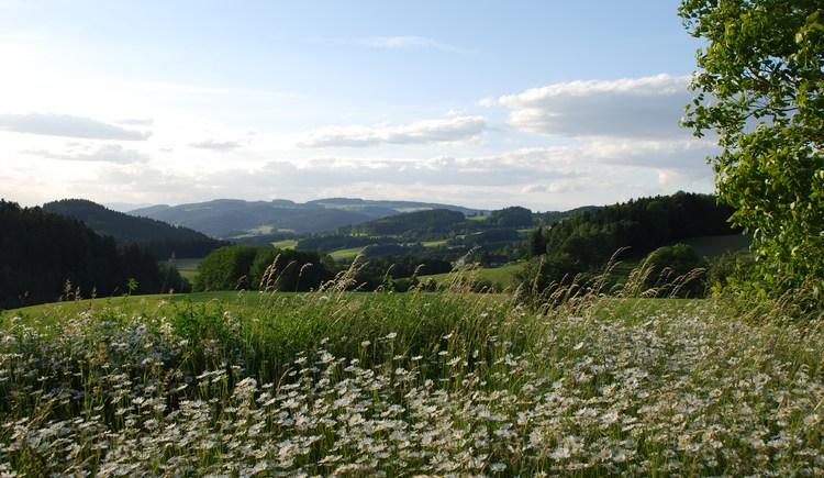 Landschaft in St. Johann (© Renate Ehrenmüller)