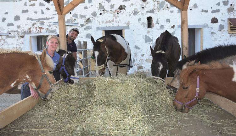 unsere Pferde im Stall (© privat)