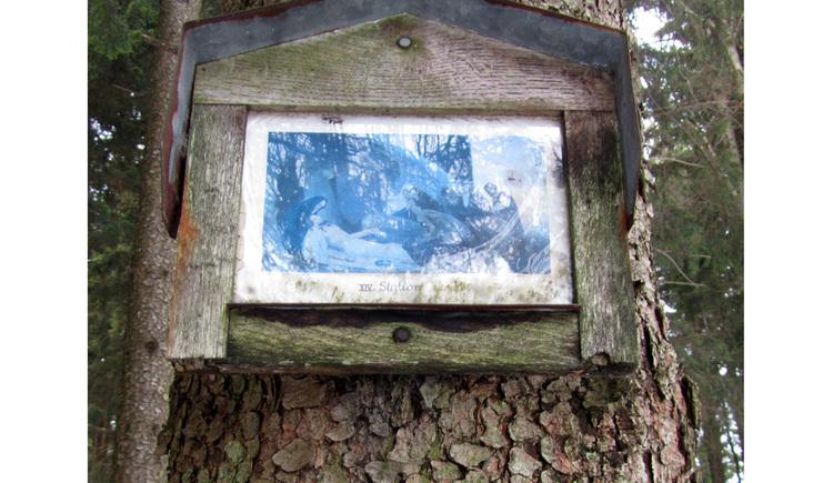 Blick auf ein Bild auf einem Baumstamm