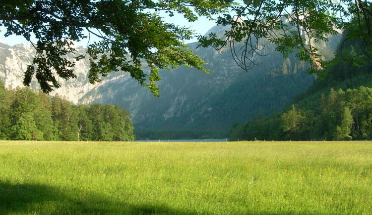 Blick Richtung Offensee (© Oberösterreich Tourismus / green-solutions)