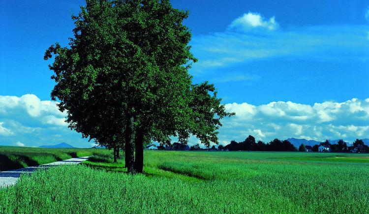 Landschaft bei Kremsmünster
