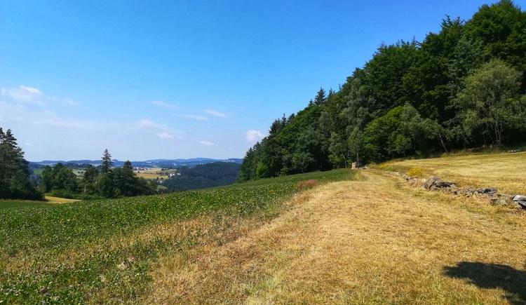 Abzweigung zum Rundweg um den Roadlberg (© Tanja Mittermair)