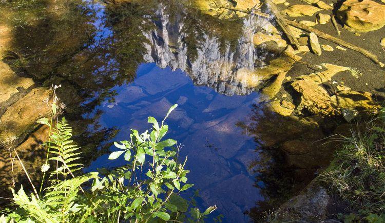 Blick in den Teich (© TVB Pyhrn-Priel/Sulzbacher)