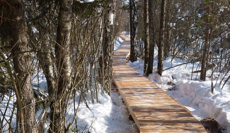 Ibmer Moor im Winter (© Sandra Reindl)