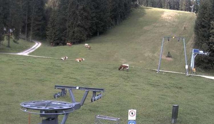 Webcam - Forsteralm - Gaflenz. (© Forsteralm Skilifte GmbH)