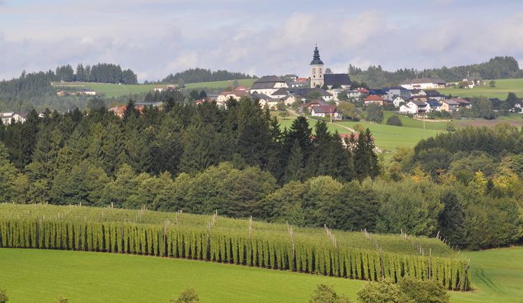 Hopfenfeld mit St. Peter am Wimberg im Hintergrund. (© Bräuer-Reiter)