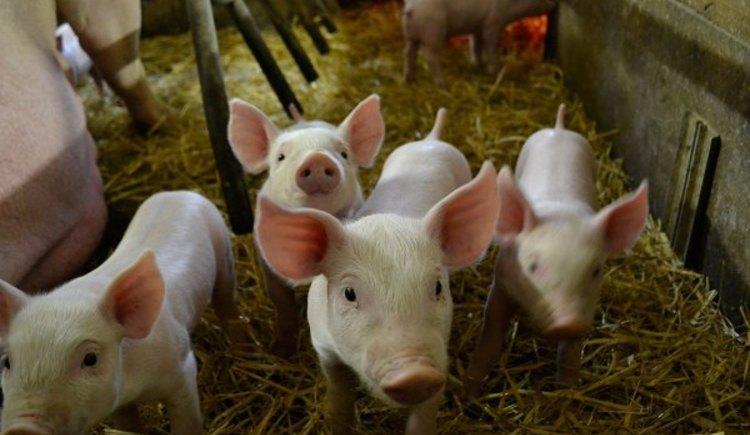Kindererlebnistage am Bauernhof (© Natschläger)