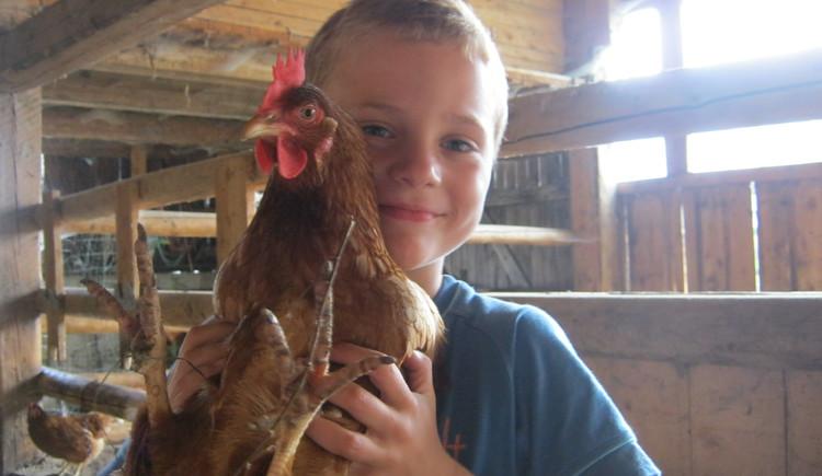 eigene Hühner , eier, Bio; Bauernhof , Kinder