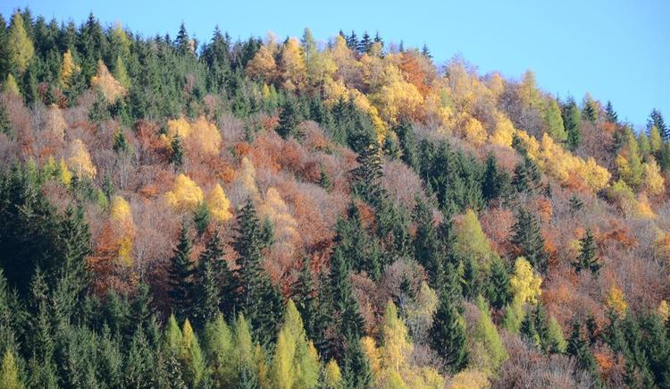 aparter Herbst (© werner mair)