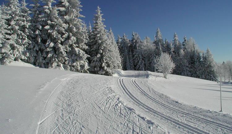 Die Loipe mit fast keiner Steigung ist ein Genuss für Langläufer. (© Ferienregion Böhmerwald)