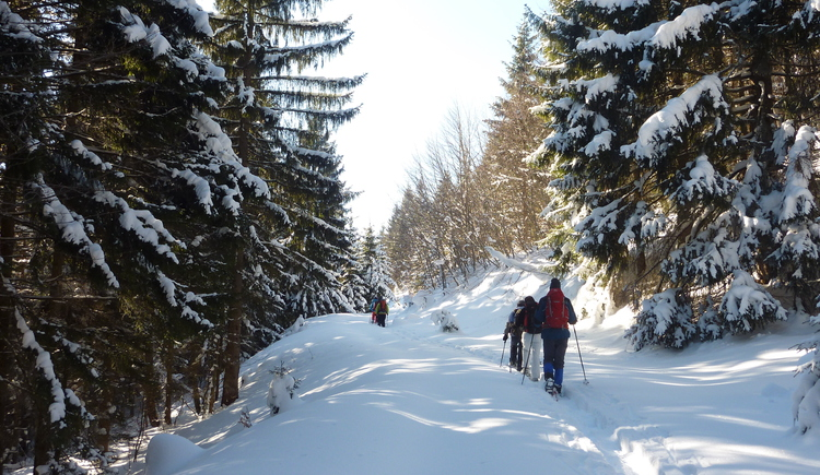 Winter in der Nationalpark Region Ennstal. (© TV Nationalpark Region Ennstal)
