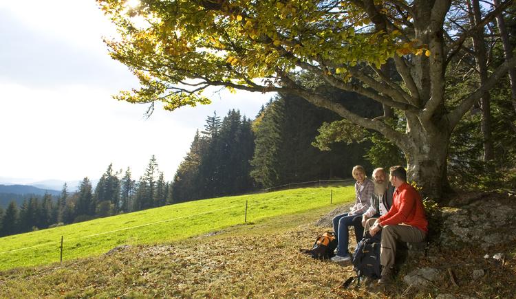 Herbst, Wandern, Mühlviertler Alm. (© OÖ Tourismus/Erber)