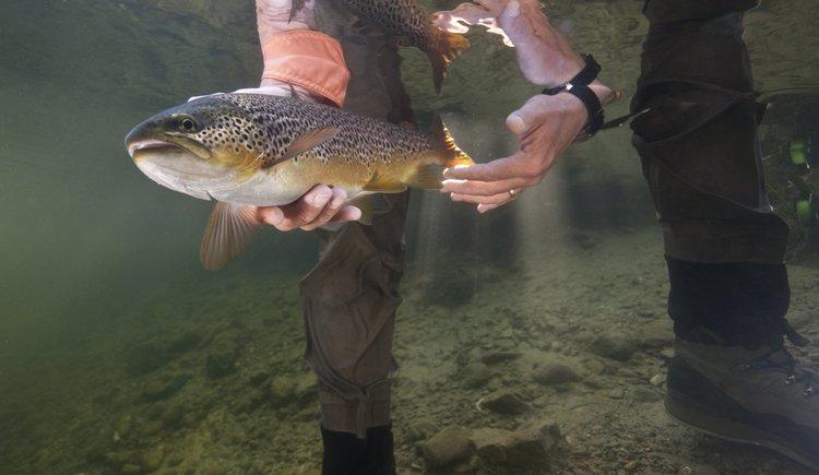 Fisch unter Wasser. (© Getty Images)