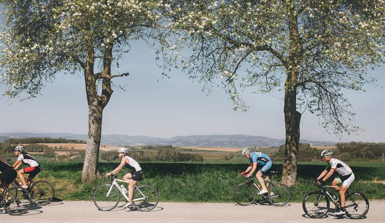 Rennradgruppe Nahe Wels mit Blick ins Mühlviertel. (© Oberösterreich Tourismus GmbH/Stefan Mayerhofer)