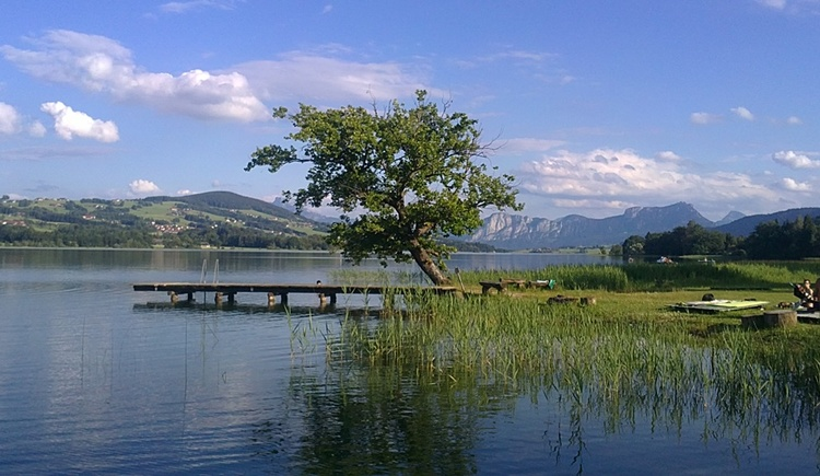 lake with reed, footbridge, crooked tree, mountains, . (© Rothner Tatjana)
