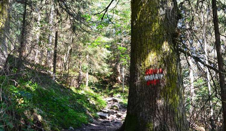 Enjoy the variety of hiking trails in our region