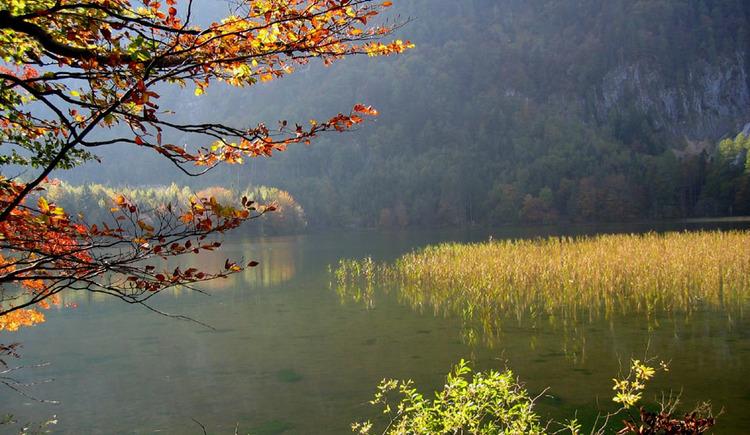 Laudachsee_mit_Herbststimmung.jpeg (© Ferienregion Traunsee)