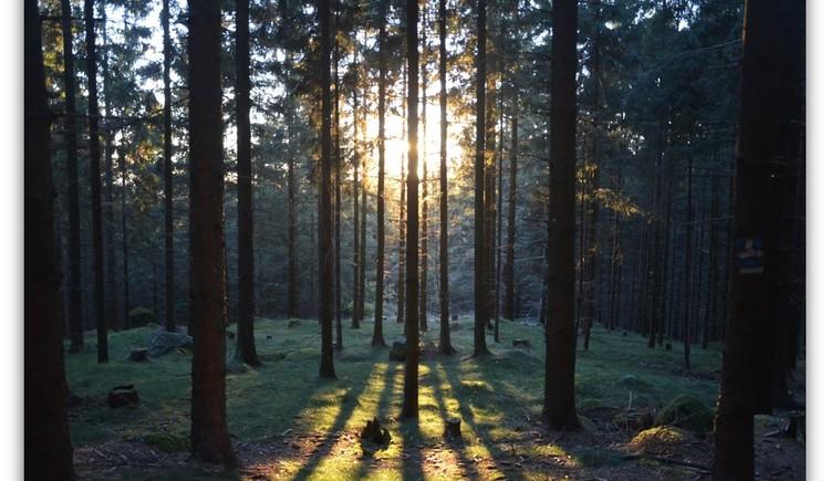 Sonnenuntergang im Wald (© Wiederstein-Graser)