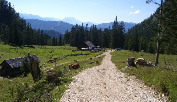 Vorbei an der Rossalm, wo man die Berge Gosaus genießen kann. (© © Michaela Kefer)