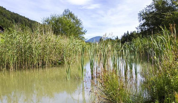 Teich vor dem Haus (© Gut Hinterklaus)