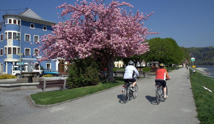 Radweg an der Donau in Aschach, Radfahrgemeinde