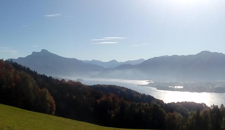 Ausblick auf den See und die Berge, im Vordergrund Wald und Wiese