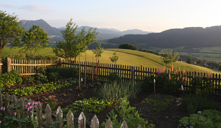 vegetable garden surrounded by a fence, fruit trees in the meadow in the background
