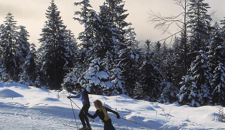 Enjoy the wonderful winter in Bad Goisern while cross-country skiing on the high-altitude trails at the Predigstuhl.