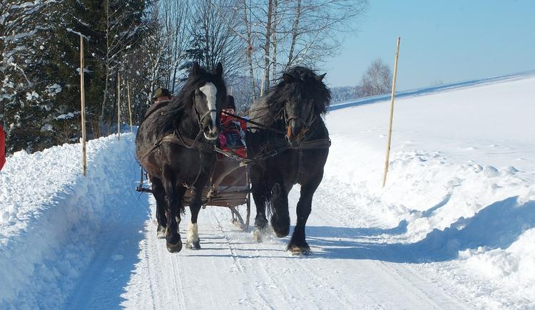 Pferdeschlittenfahrten sind ein besonderes Erlebnis. (© Lindorfer)