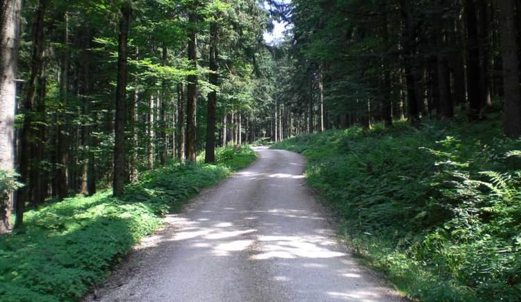 eine Forststraße, die durch den Wald führt. (© www.mondsee.at)