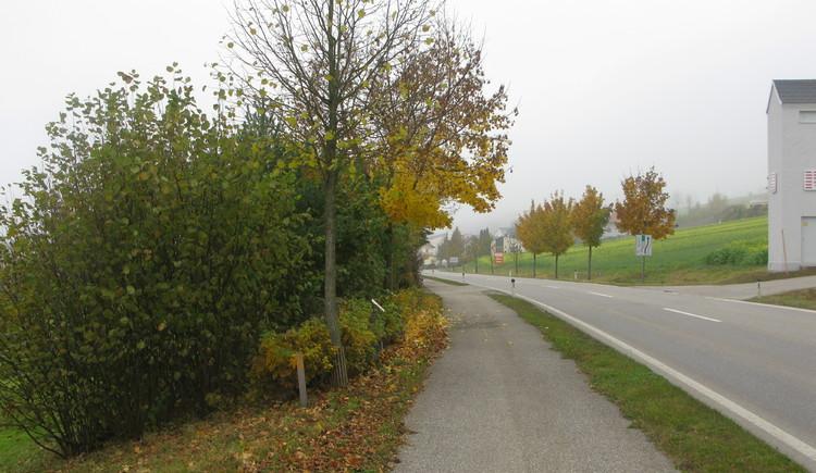 Hildegard-von-Bingen-Weg kirchheim.jpg