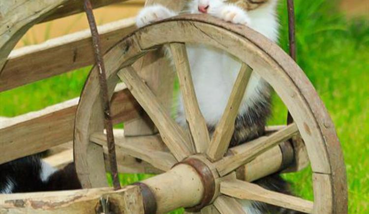 unsere kleine Katze
