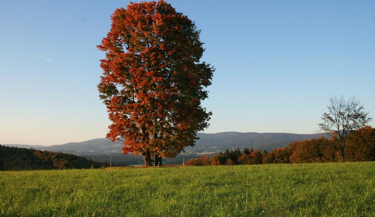 Naturbesonderheiten am Weg der Entschleunigung (© Ferienregion Böhmerwald | List)